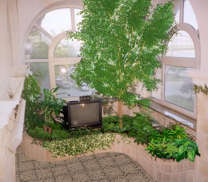 Зимний сад на лоджии. помощь специалистов.